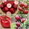 Giống cây táo tây đỏ