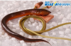 Mẹo giúp thịt lươn thêm đậm đà