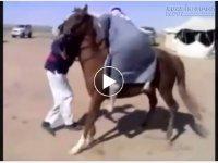 Tổng hợp những pha ngã ngựa cười ra nước mắt