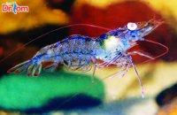 Bệnh hoại tử gan tụy trên tôm và cách phòng ngừa hiệu quả