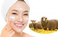 Nhau thai cừu có tác dụng gì?
