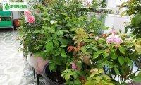 Công ty Maka Việt Nam – Cung cấp giải pháp tưới tự động cho khu vườn