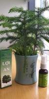 Tinh dầu trị nhức mỏi Tinh dầu Thảo Dược Lợi An - Hết đau mỏi, Khỏi sưng viêm