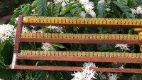 Kinh doanh sữa ong chúa giá sỉ vắt trực tiếp tại vườn ong