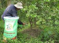 Một số lưu ý khi bón phân cho cây ăn trái