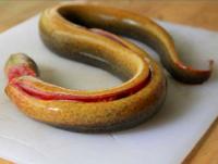 Mẹo sơ chế lươn không tanh
