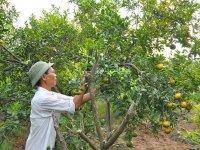 Mục đích của việc tạo tán và đốn tỉa cành cây ăn quả