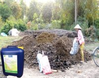 Hướng dẫn ủ phân trâu bò bằng chế phẩm EM