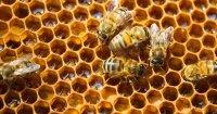 Ý nghĩa logo Bee Light - thương hiệu đèn trang trí Bee light®