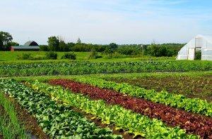 Địa chỉ cung cấp Rau củ quả sạch hữu cơ tại Đà Lạt, Đà Nẵng