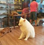 Chào năm Mậu Tuất, hãy tìm hiểu những sự thật đầy bất ngờ về loài chó - người bạn thân nhất của con người