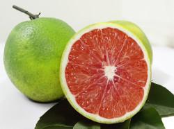 Cam Cara ruột đỏ - giống cam quý, phù hợp cho những người ăn kiêng