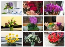 Phương pháp giữ hoa tươi lâu hơn, 78299, In Pp Giá Rẻ Tại Tphcm, , 29/12/2017 13:32:08
