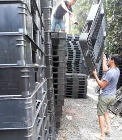 Pallet nhựa thanh lý Hà Nội