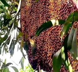Mua mật ong khoái rừng Lâm Đồng chính hiệu ở đâu ?