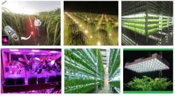 Ứng dụng của đèn led siêu sáng trong nông nghiệp