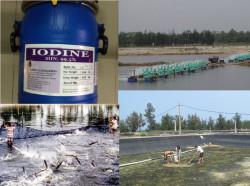 Ưu thế thuốc khử trùng nước có gốc Iodine