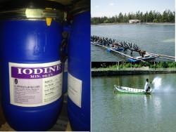 Sử dụng hiệu quả thuốc sát trùng trong thủy sản
