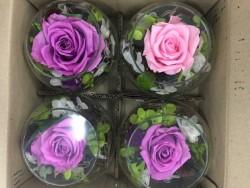 Chọn mua hoa hồng bất tử giá rẻ