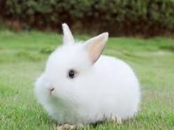 Quy trình dùng thuốc trong chăn nuôi thỏ