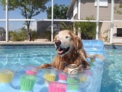 Những điều cần lưu ý và quan tâm khi tắm cho chó