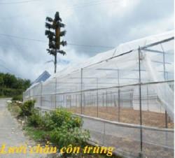 Lưới bao che côn trùng dùng bảo vệ cho cây trồng loại 200 lỗ