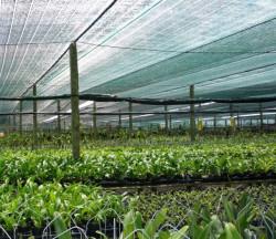 Lưới che nắng Thái Lan sử dụng với mục đích gì?