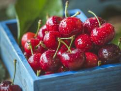 Ăn Cherry có mập không?