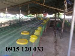 Lưới nhựa cứng không rỉ sét dùng vây, rào, lót sàn vật nuôi hiệu quả