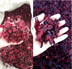 Mua hoa atiso khô ở đâu chất lượng tốt?
