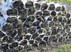 Có nên mua cỏ nhung nhật giá rẻ không?