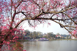 Hồ Xuân Hương – Điểm nhấn đặc sắc của Đà Lạt
