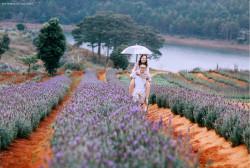 Những cánh đồng hoa Đà Lạt siêu đẹp 2019