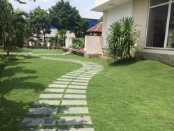 Báo giá Cỏ nhung Nhật Cỏ sân vườn cỏ trang trí TPHCM