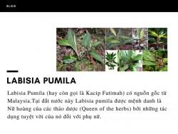 Labisia Pumila là gì?