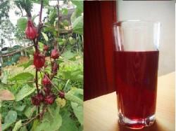 Không chỉ tốt cho tim mạch trà Hibiscus còn nhiều lợi ích tuyệt vời khác.