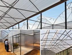 Lưới chắn côn trùng nông nghiệp hỗ trợ ngăn chặn sâu bệnh và sự tác động của điều kiện tự nhiên đến cây trồng