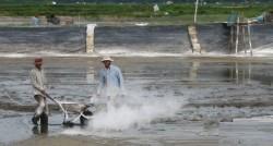 Ứng dụng của canxi ( Calci Green) trong nuôi trồng thủy sản