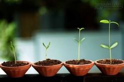 4 điều khởi nghiệp viên cần biết khi thuê những nhân sự đầu tiên