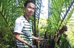 Khai thác dịch nhựa từ dừa nước