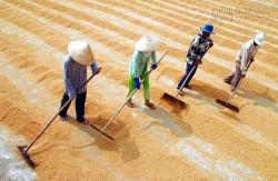 Xuất khẩu nông sản: Giảm không chỉ vì tỷ giá