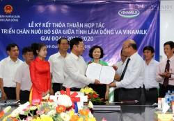 Vinamilk hợp tác với Lâm Đồng mở rộng chăn nuôi bò sữa
