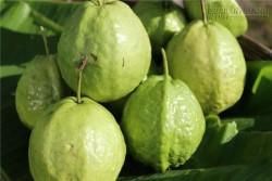 Loại quả mùa hè giúp chặn đứng bệnh tiểu đường