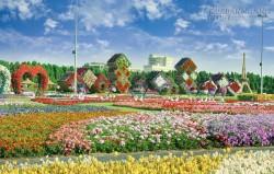 45 triệu đóa hoa nở giữa sa mạc ở Dubai