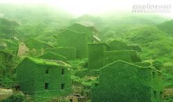 Ngôi làng phủ kín dây leo giữa đảo hoang