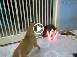 Chó mèo đánh nhau theo phong cách: Chiến tranh giữa các vì sao