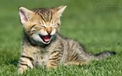 Hãy sống như một chú mèo