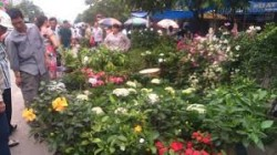 Chợ Hàng - Nét quê quyến rũ của thành phố Cảng