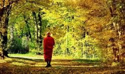 Tu hành không phải là buông bỏ, mà là để hiểu lẽ hoán đổi…