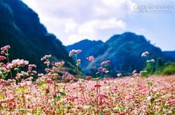 5 địa điểm tuyệt vời để tận hưởng mùa thu trong nước
